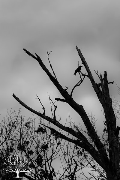 20121031_Fall-Halloween_11163