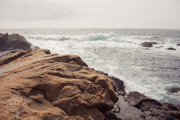 point-lobos-0293