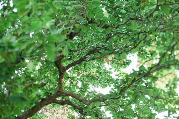 trees-0296