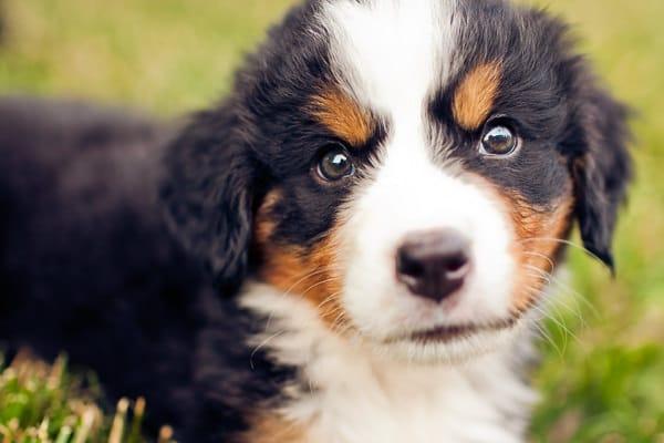 20120611_puppies_7517